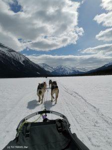 Mit den Schlittenhunden durch Kanada