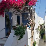 Frühlingserwachen in Griechenland