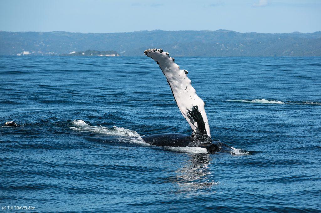 Walflüsterin