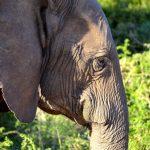 Der Elefant vor der Haustür