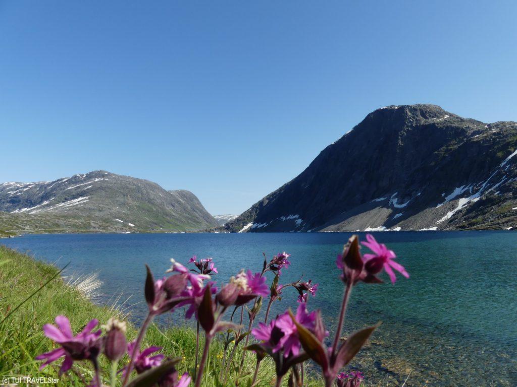 Nutur pur in den Fjorden