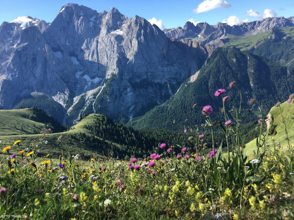 Blumen und Berge Trentino